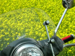 黄ガラシの花